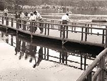 昭和30年代井の頭公園 七井橋撮影:大竹新助