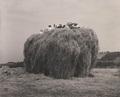 次回企画展予告「芸術写真の時代-塩谷定好展」